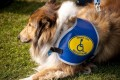 Making Travel Accessible When Traveling Abroad With a Service Animal